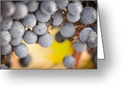 Ripened Fruit Greeting Cards - Grapes with Mist Drops on the Vine Greeting Card by Andy Dean