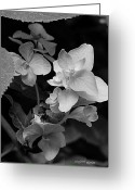  Flowers Photographs Greeting Cards - Magnolia Plantation and Gardens Collection Greeting Card by DigiArt Diaries by Vicky Browning