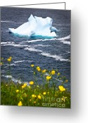 Sea Flowers Greeting Cards - Melting iceberg Greeting Card by Elena Elisseeva
