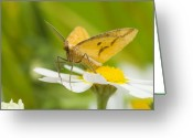 Antenna Greeting Cards - Moth Greeting Card by Andre Goncalves