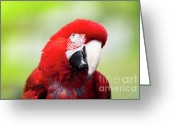 Vet Photo Greeting Cards - Parrot Greeting Card by Sebastian Musial