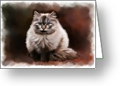 Pets Portraits Greeting Cards - Pet Cat Portrait Greeting Card by Michael Greenaway