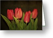 Tulips Greeting Cards - Pink Tulips Greeting Card by Cathie Tyler