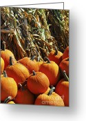Corn Greeting Cards - Pumpkins Greeting Card by Elena Elisseeva