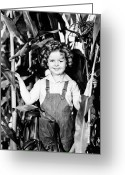 Cornfield Greeting Cards - Shirley Temple (1928- ) Greeting Card by Granger