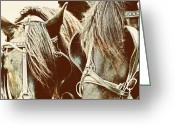 Carriage Team Greeting Cards - Teamwork Greeting Card by JAMART Photography