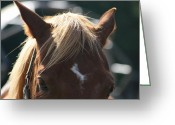 Horse Pyrography Greeting Cards - The Beauty Of The Horses Greeting Card by Valia Bradshaw