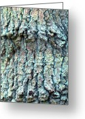 Lichen Greeting Cards - Tree Bark Greeting Card by John Foxx