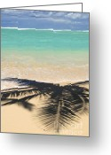 Shadow Greeting Cards - Tropical beach Greeting Card by Elena Elisseeva