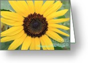 True Colors Greeting Cards - True colors of summer Greeting Card by Joshua Fronczak