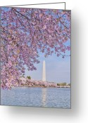 Pink Flower Branch Greeting Cards - Usa, Washington Dc, Cherry Tree In Blossom With Jefferson Memorial In Background Greeting Card by Tetra Images