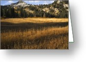Forested Greeting Cards - Wasatch Mountains in Autumn Greeting Card by Utah Images
