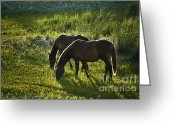 Wild Horses Greeting Cards - Wild Spanish Mustang Greeting Card by John Greim