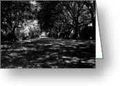 Driveways Greeting Cards - Fine Art Photography Greeting Card by Jean Wolfrum