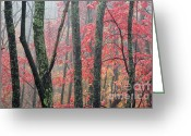 Williams Greeting Cards - Autumn Monongahela National Forest Greeting Card by Thomas R Fletcher