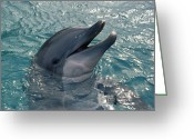 Bottle-nosed Dolphin Greeting Cards - Bottlenose Dolphin Greeting Card by Alexis Rosenfeld