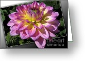 Gipsy Greeting Cards - Dahlia named Jowey Gipsy Greeting Card by J McCombie