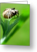 Designs With Photography Greeting Cards - 4 Eyes Greeting Card by Louie Rochon