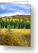 North Greeting Cards - Fall forest Greeting Card by Elena Elisseeva