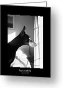 Dobermann Greeting Cards - Fascination  Greeting Card by Rita Kay Adams