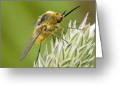 Antenna Greeting Cards - Fly Greeting Card by Andre Goncalves