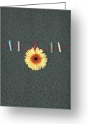 Yellow Line Greeting Cards - Gerbera Greeting Card by Joana Kruse