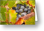Ripened Fruit Greeting Cards - Grapes on the Vine Greeting Card by Andy Dean