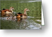Beautiful Birds With Babies Greeting Cards - Happy Family Greeting Card by Valia Bradshaw