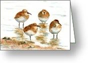 Sandpiper Greeting Cards - 4 Little Pipers Greeting Card by Marsha Elliott