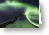 Bare Trees Greeting Cards - Northern Lights In The Arctic Greeting Card by Arild Heitmann