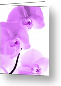 Nes Greeting Cards - Orchid Greeting Card by Falko Follert