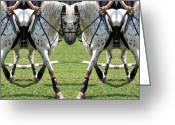 Side Saddle Greeting Cards - Untitled Greeting Card by East Coast Barrier Islands Betsy A Cutler