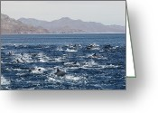 Oceans And Seas Greeting Cards - Untitled Greeting Card by Walter Meayers Edwards