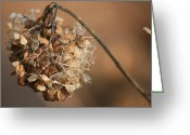 Seeds Pyrography Greeting Cards - Winter Beauty Greeting Card by Valia Bradshaw