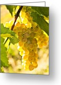 Vine Photo Greeting Cards - Yellow grapes Greeting Card by Elena Elisseeva
