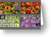 Tulip Greeting Cards - 48 Beautiful and Inspiring Flower Photographs Greeting Card by Juergen Roth