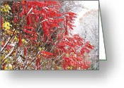 Williams Greeting Cards - Autumn Snow Monongahela National Forest Greeting Card by Thomas R Fletcher