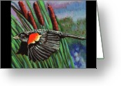Red Wing Blackbird Greeting Cards - Birdman of Alcatraz detail Greeting Card by John Lautermilch