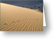 Desert Rat Photo Greeting Cards - Death Valley Greeting Card by Mark Weber