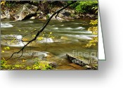 Williams Greeting Cards - Fall along Williams River Greeting Card by Thomas R Fletcher