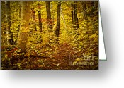 Warm Greeting Cards - Fall forest Greeting Card by Elena Elisseeva