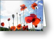 Blurry Greeting Cards - Field of poppies. Greeting Card by Bernard Jaubert