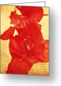 Northwest Flowers Greeting Cards - Gladiola Greeting Card by Cathie Tyler