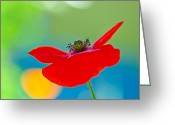 Decorativ Photo Greeting Cards - Poppy Greeting Card by Silke Magino