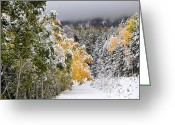 Seasons Framed Prints Prints Greeting Cards - Rocky Mountain Fall Greeting Card by Southern Utah  Photography