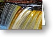 Fall Colors Greeting Cards - The Flow Greeting Card by Steve Harrington