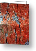 Tree Greeting Cards - Tree Bark Greeting Card by John Foxx