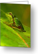 Frog Greeting Cards - Tree frog Greeting Card by Odon Czintos