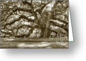 Oak Tree Greeting Cards - Angel Oak Live Oak Tree Greeting Card by Dustin K Ryan