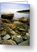 Seagulls Greeting Cards - Atlantic coast in Newfoundland Greeting Card by Elena Elisseeva